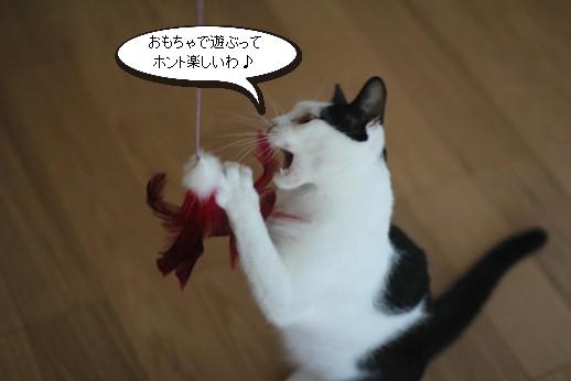 おもちゃ遊び習得とシニア猫さんの近況報告_e0151545_19395853.jpg