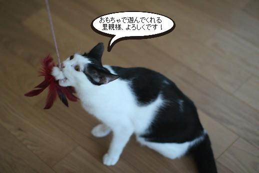 おもちゃ遊び習得とシニア猫さんの近況報告_e0151545_19424979.jpg
