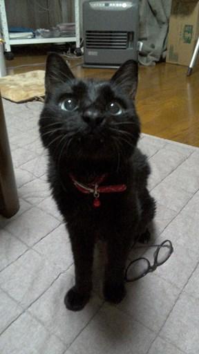おもちゃ遊び習得とシニア猫さんの近況報告_e0151545_19444976.jpg