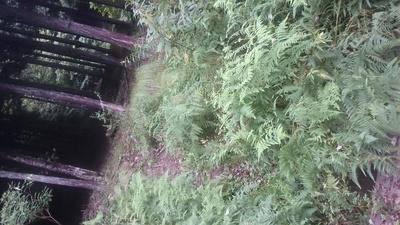 マスキ嵐沢ー権現山南側の尾根_c0145582_7411381.jpg