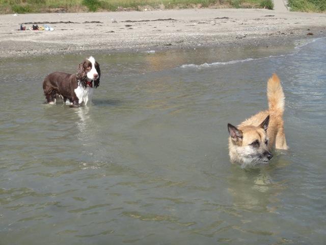 gaga & noa  /  Beach_b0195093_06233591.jpg