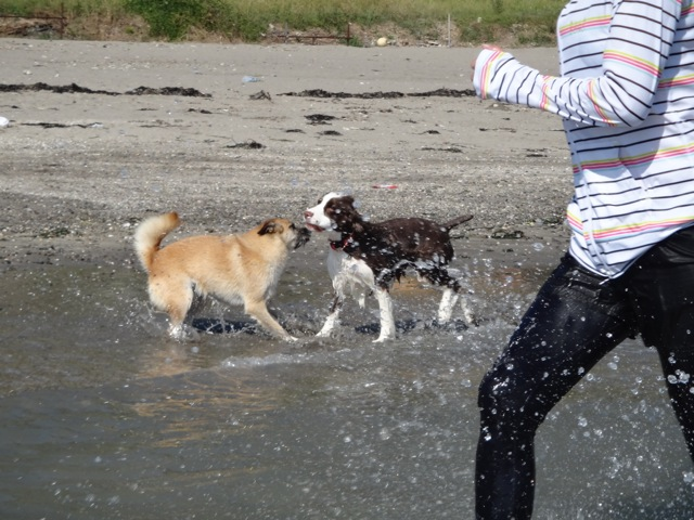 gaga & noa  /  Beach_b0195093_06235122.jpg