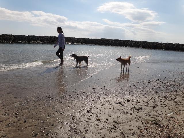 gaga & noa  /  Beach_b0195093_06251050.jpg