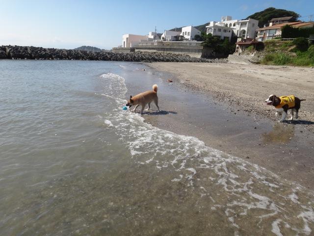 gaga & noa  /  Beach_b0195093_06261575.jpg