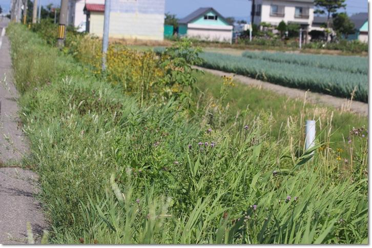ミズアオイと野草 1_f0146493_20103878.jpg