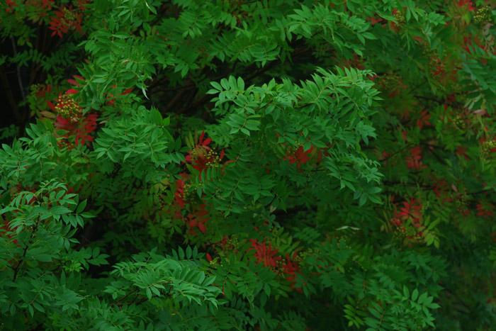 緑緑赤緑緑緑赤緑緑緑緑。。。。。_b0103798_546739.jpg