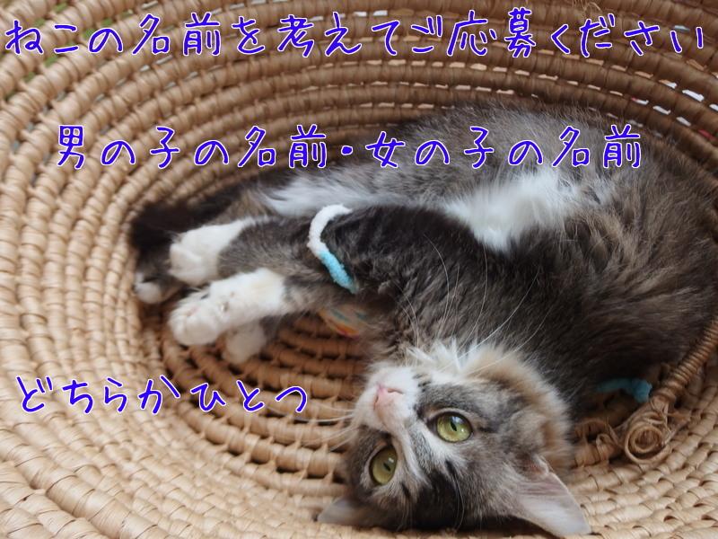 a0177105_19022380.jpg
