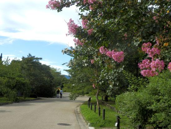 空は秋 植物園で_e0048413_23461510.jpg