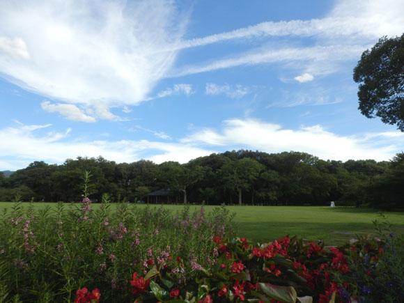 空は秋 植物園で_e0048413_23463128.jpg