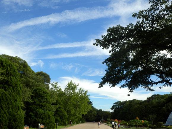 空は秋 植物園で_e0048413_23463719.jpg