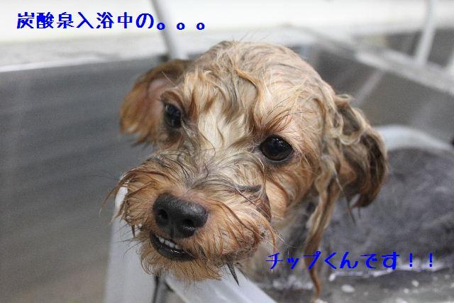 b0130018_16242159.jpg