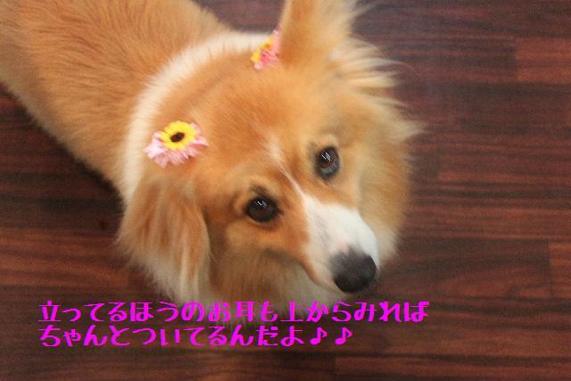 b0130018_167999.jpg