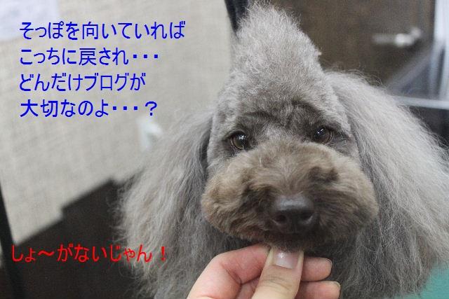 b0130018_175585.jpg
