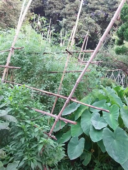 ジャングルで。_a0125419_06153153.jpg