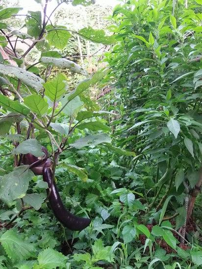 ジャングルで。_a0125419_06170702.jpg
