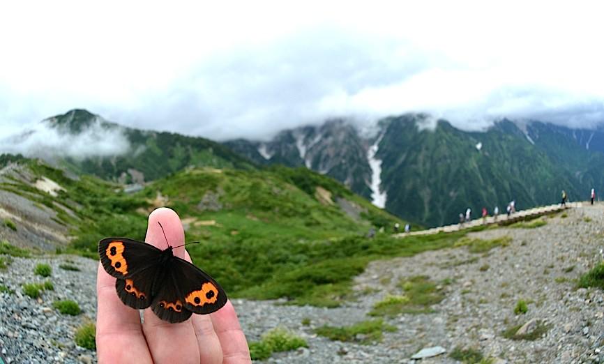 信州の蝶たち2014、その1 ベニヒカゲ三昧(2014年8月21日) _d0303129_2281686.jpg