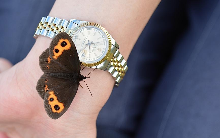 信州の蝶たち2014、その1 ベニヒカゲ三昧(2014年8月21日) _d0303129_2285623.jpg