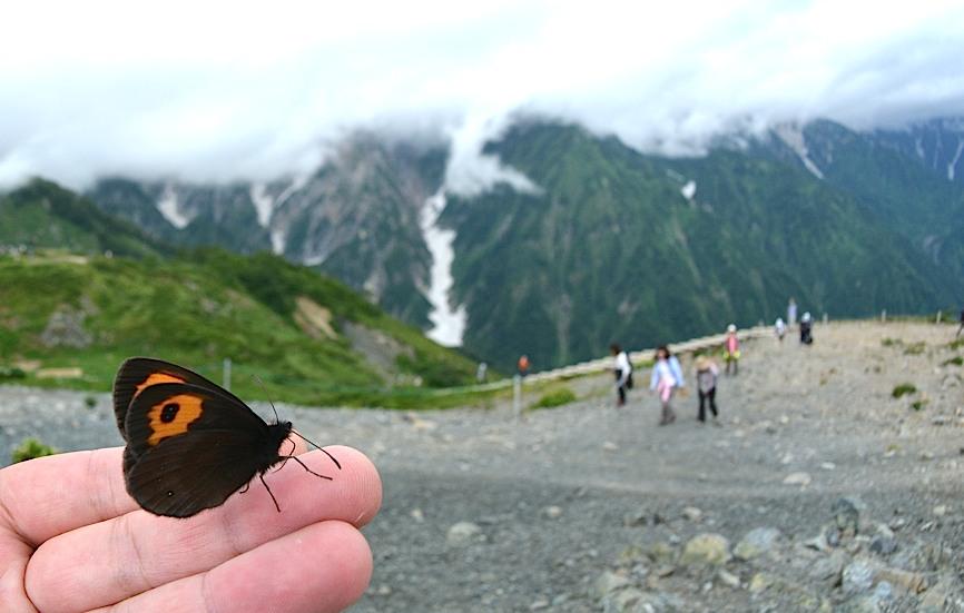 信州の蝶たち2014、その1 ベニヒカゲ三昧(2014年8月21日) _d0303129_228751.jpg