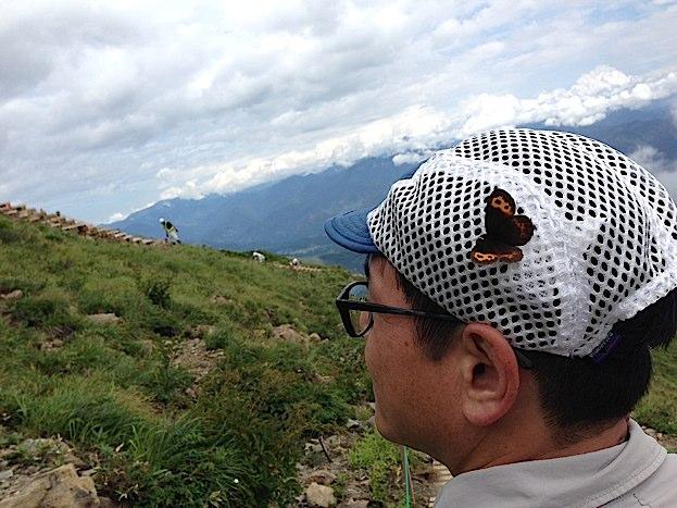 信州の蝶たち2014、その1 ベニヒカゲ三昧(2014年8月21日) _d0303129_2291670.jpg
