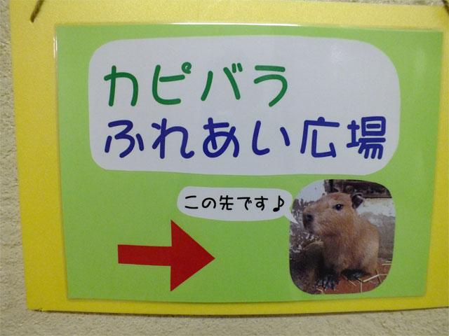 ベビカピちゃんとのふれあい_a0179837_1644482.jpg
