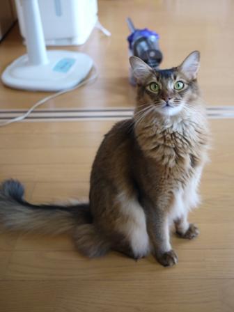 猫のお友だち ブブくん編。_a0143140_21203953.jpg