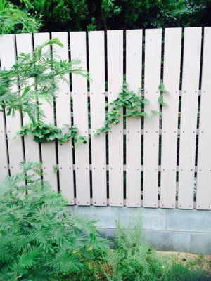 庭、リニューアル!_c0274374_17361078.jpg
