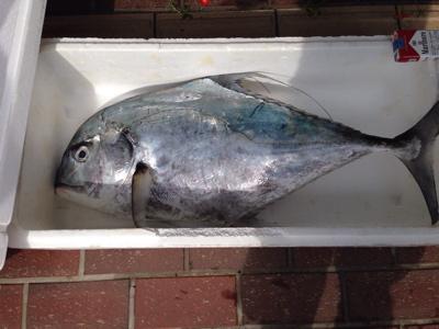 田平漁港のお魚_f0232994_3274991.jpg
