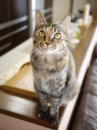 猫のお友だち ワサビちゃん天ちゃんう京くん編。_a0143140_2046507.jpg