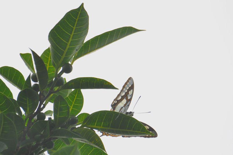 8月15日~18日(雨・くもり・晴れ)タイトル:沖縄遠征その4_f0105542_7154935.jpg