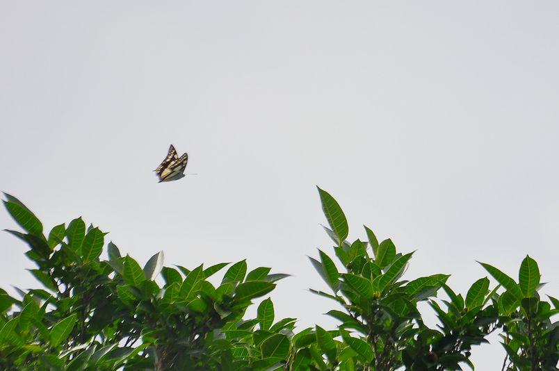 8月15日~18日(雨・くもり・晴れ)タイトル:沖縄遠征その4_f0105542_7174876.jpg
