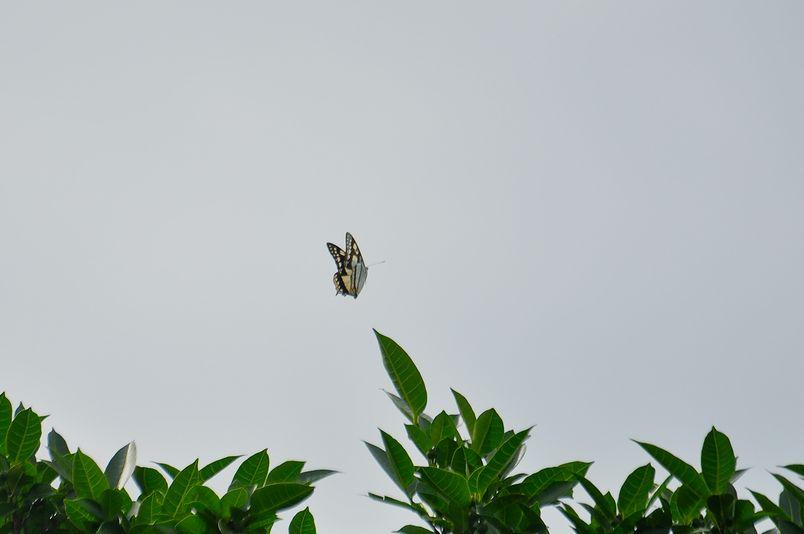 8月15日~18日(雨・くもり・晴れ)タイトル:沖縄遠征その4_f0105542_7181726.jpg