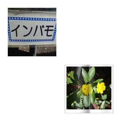 f0031546_2222489.jpg