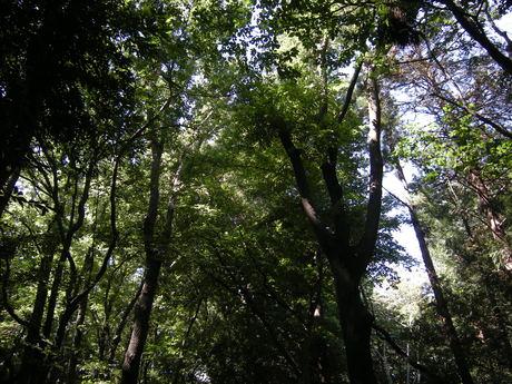 聖蹟桜ヶ丘から笹塚_c0131063_1725486.jpg