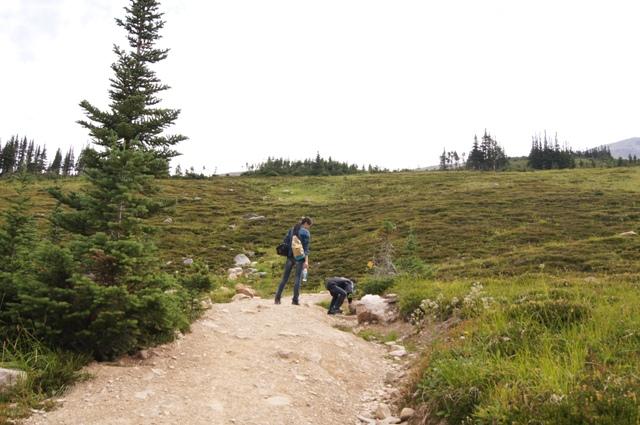 カナダ旅行(5)=ジャスパー国立公園=_f0314272_05163997.jpg