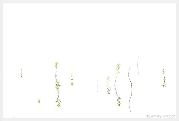 b0260373_19080181.jpg
