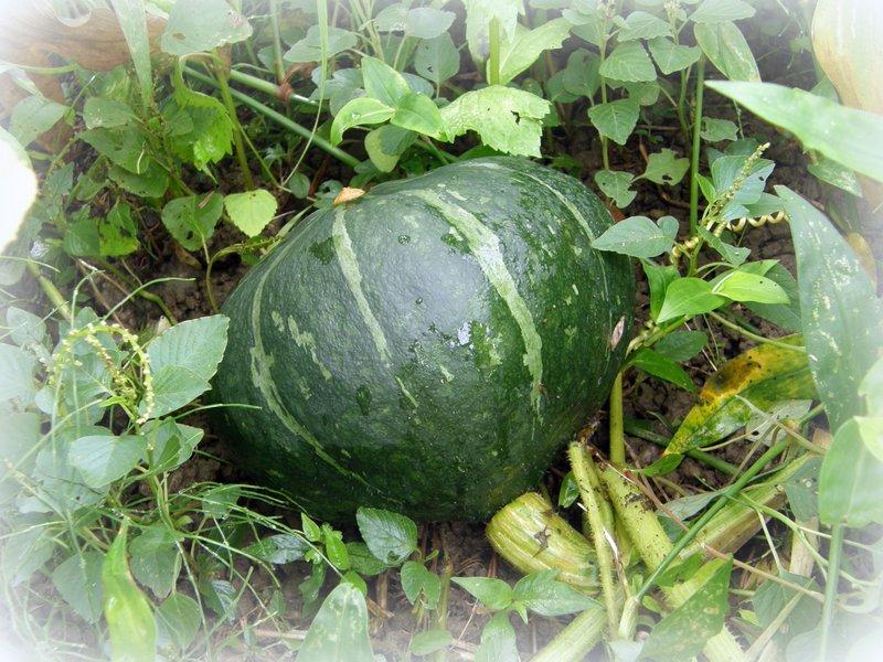 美山 de 収穫~~~_c0057390_0105973.jpg