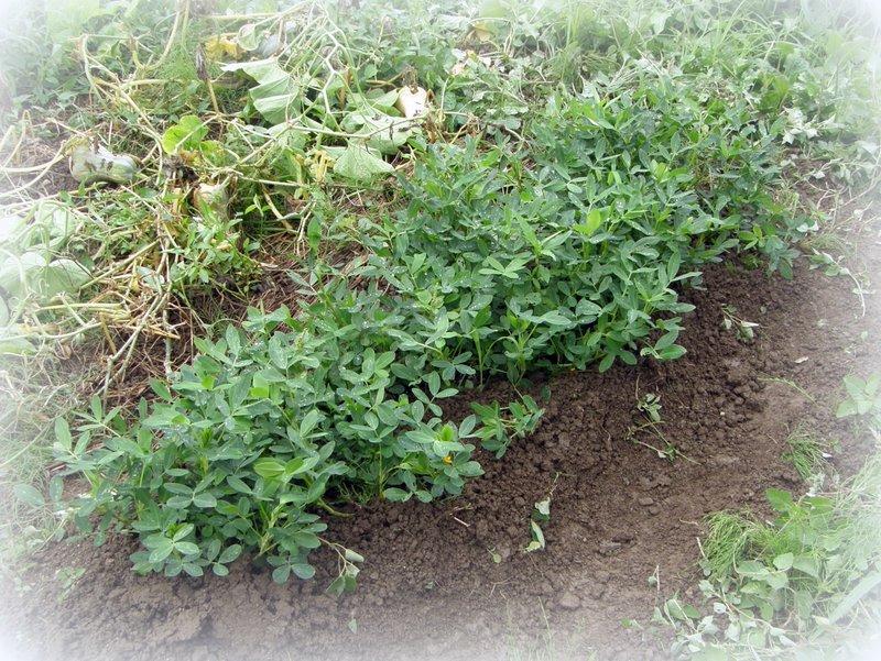 美山 de 収穫~~~_c0057390_0111187.jpg