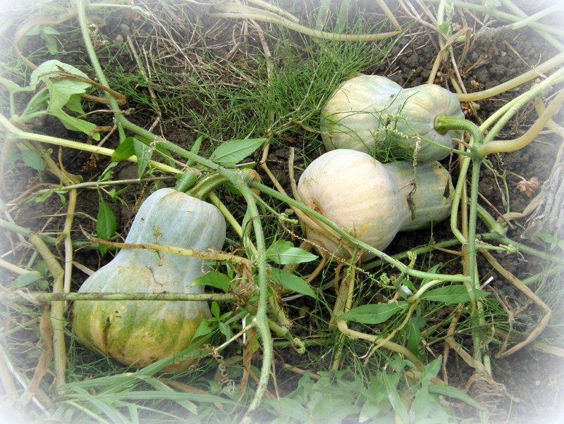 美山 de 収穫~~~_c0057390_01142.jpg