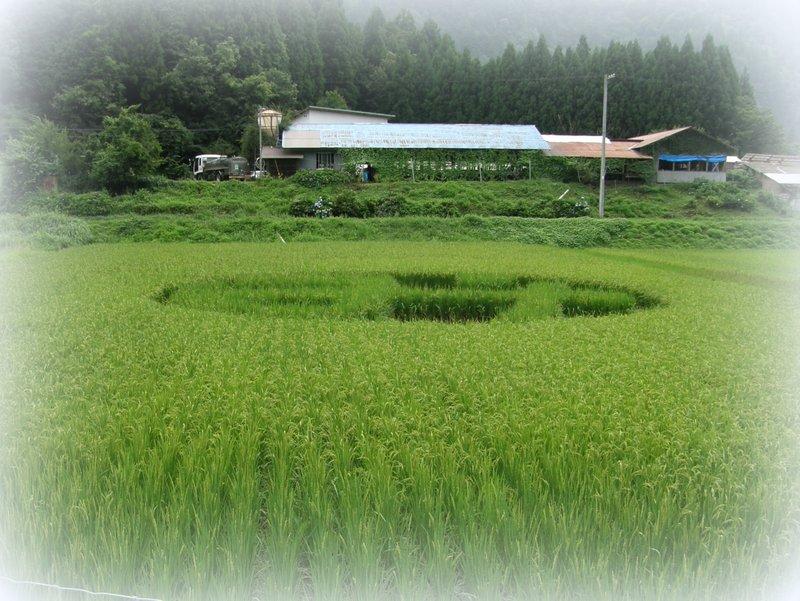 美山 de 収穫~~~_c0057390_012252.jpg