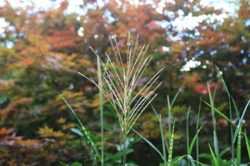 秋をみつけました_e0179508_16092889.jpg