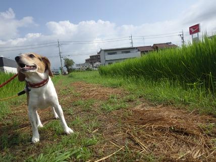 8/23 お散步02_e0236430_10343848.jpg