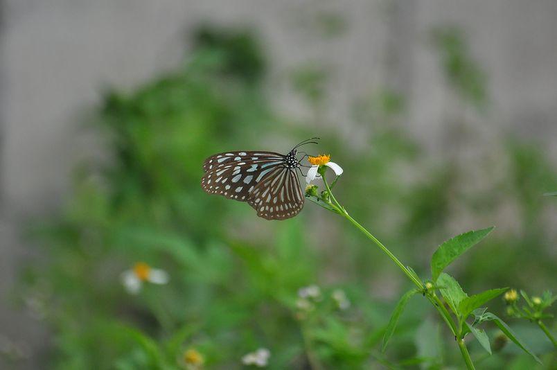 8月15日~18日(雨・くもり・晴れ)タイトル:沖縄遠征その5_f0105542_94345.jpg