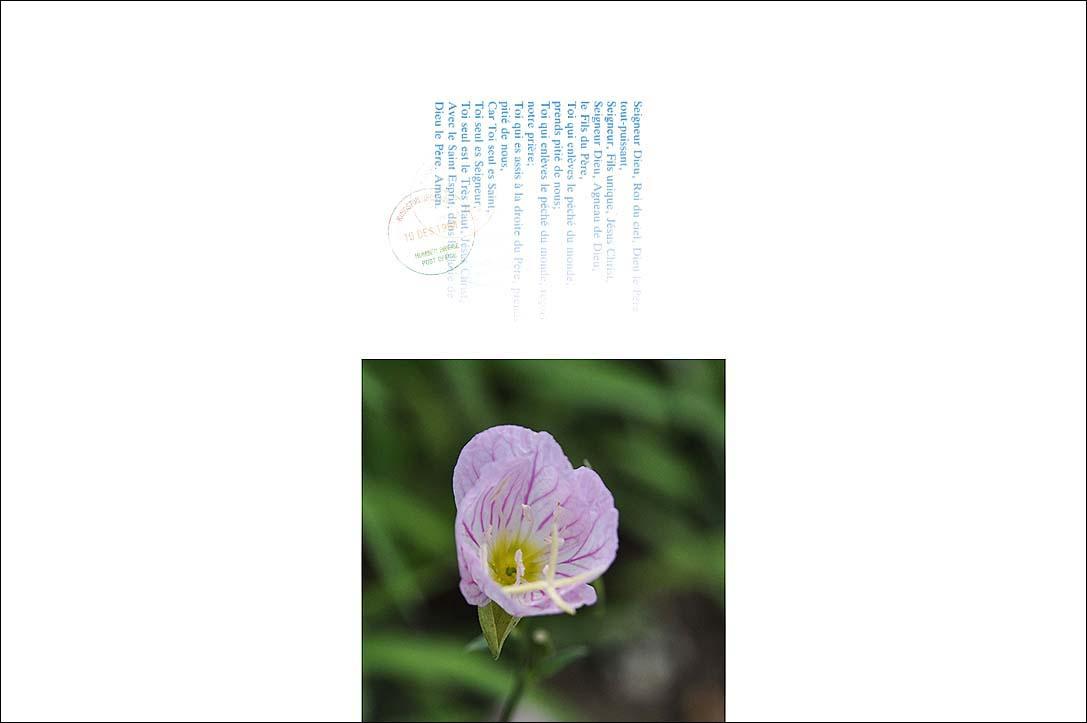 f0198771_03515.jpg