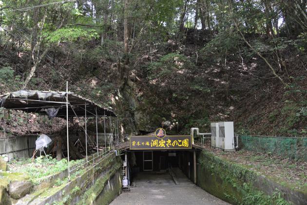 鹿児島の珍スポット。洞窟きのこ園_e0171573_1842405.jpg