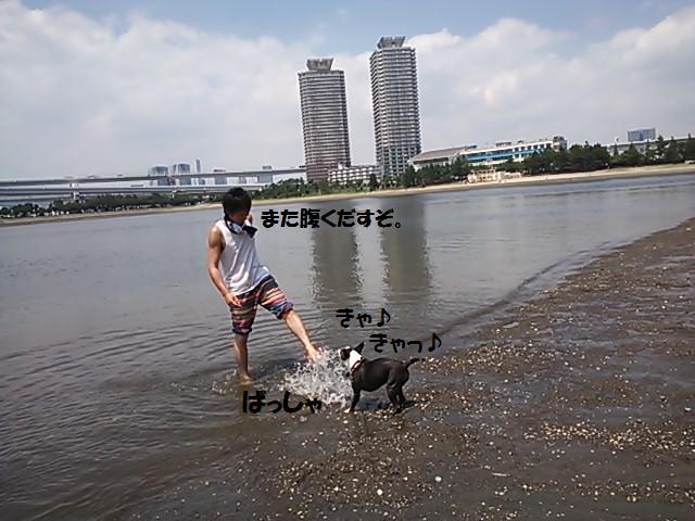 ★海を好きになりましょう  @お台場★_d0187891_11121535.jpg