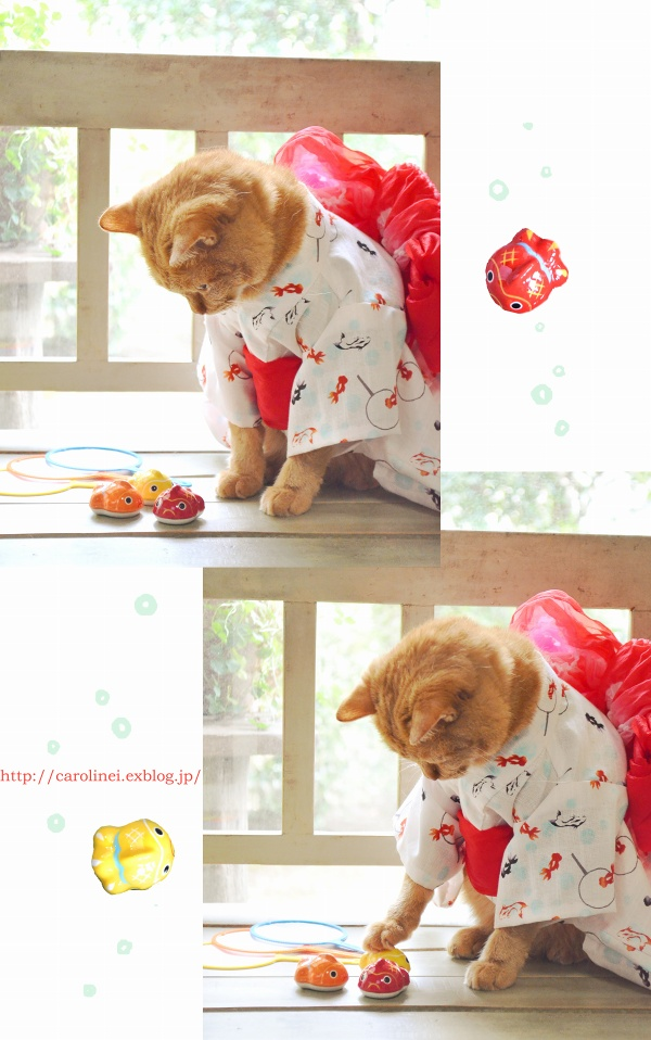猫だって浴衣が着たい♪  Cat\'s Yukata-an informal cotton kimono for summer_d0025294_20252731.jpg