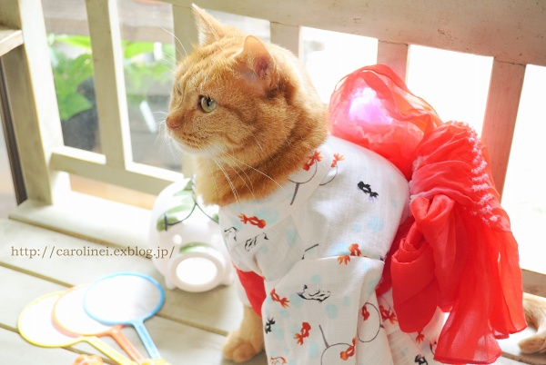 猫だって浴衣が着たい♪  Cat\'s Yukata-an informal cotton kimono for summer_d0025294_20253572.jpg