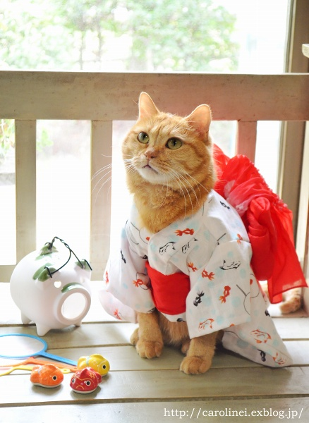 猫だって浴衣が着たい♪  Cat\'s Yukata-an informal cotton kimono for summer_d0025294_20254480.jpg