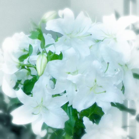 b0130112_20121100.jpg