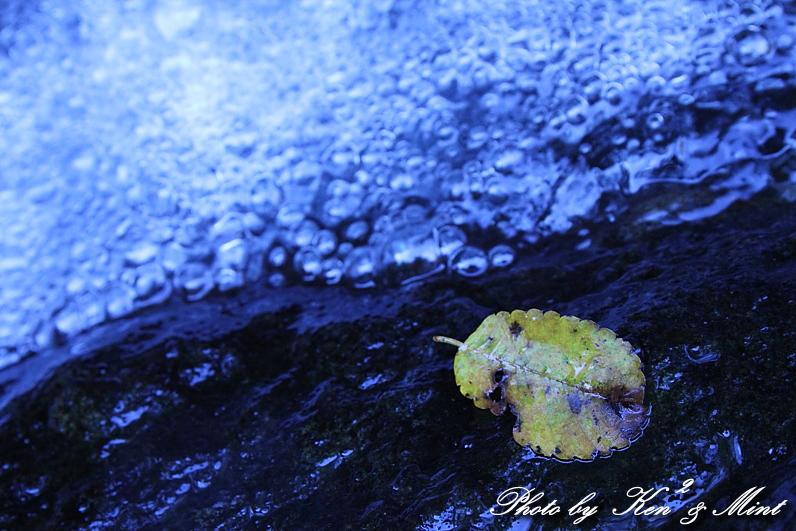 涼を求めて・・ 「自然の宝石」 ♪_e0218518_2015868.jpg
